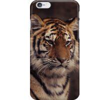 siberian tiger iPhone Case/Skin