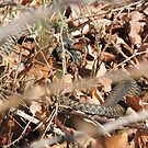 Minsmere Adder by CreativeEm