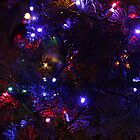 Christmas Lights by Timothy Frink