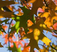 Autumn Kisses by Shaun Colin Bell