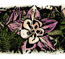 Artistic woodcut Colorado columbine flower by artisticattitud