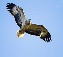 Eagle Medicine by byronbackyard