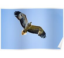 Eagle Medicine Poster