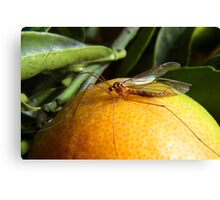 Yellow Insect on an Orange Canvas Print