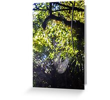 Spider's web Greeting Card