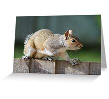 Creeping Squirrel Greeting Card