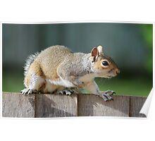 Creeping Squirrel Poster