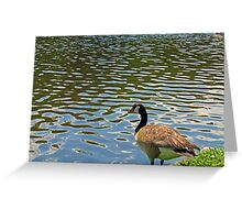Lookout River Greeting Card