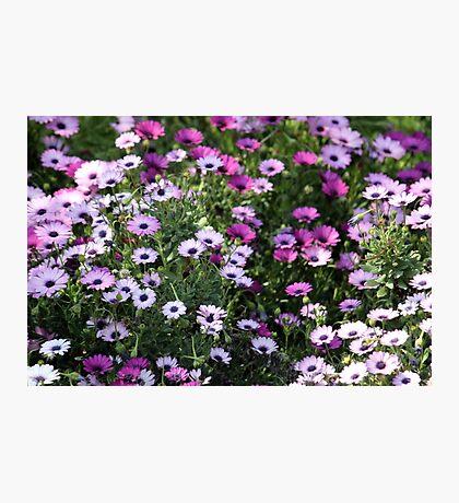 Shades of purple Photographic Print
