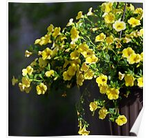 Yellow hanging basket .. Poster