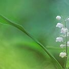 Lily of the Valley... by Bob Daalder