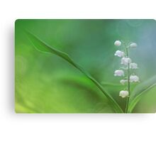 Lily of the Valley... Canvas Print