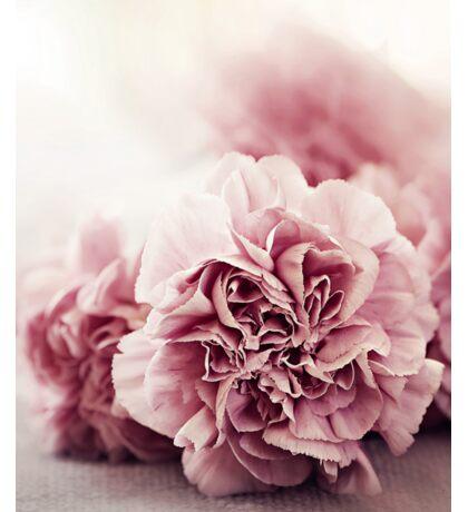 Pink Carnations Sticker