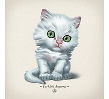 Cataclysm - Turkish Angora Kitten - Classic Photographic Print