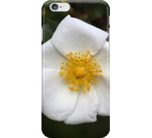 Rose flower of the species Rosa corymbifera iPhone Case/Skin
