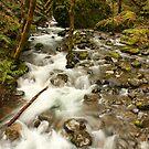 Fall Creek, Umpqua Valley by Chappy