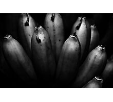 entertaining bunch Photographic Print