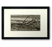 branch Framed Print
