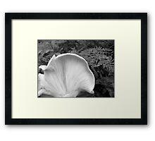 White gills Framed Print