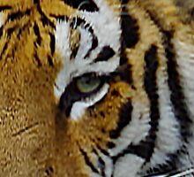 Siberian Tiger Closeup Photo of Face Sticker