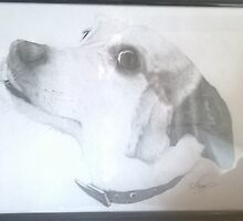 Framed Dog Drawing by Darrel Leigh