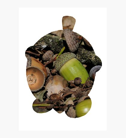 Seedot used Nature Power Photographic Print