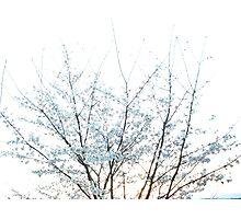Blue Zap Photographic Print