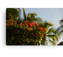 Bougainvilleas and Palm Trees Swaying in the Wind in Waikiki, Honolulu, Hawaii Canvas Print