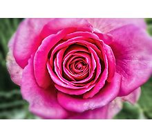 Hot Pink Rose Closeup Photographic Print