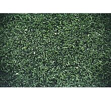 GREEN GRASS TEXTURE PHOTOGRAPHY Photographic Print