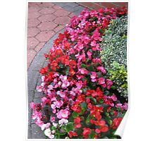 A Multitude of Begonias Poster
