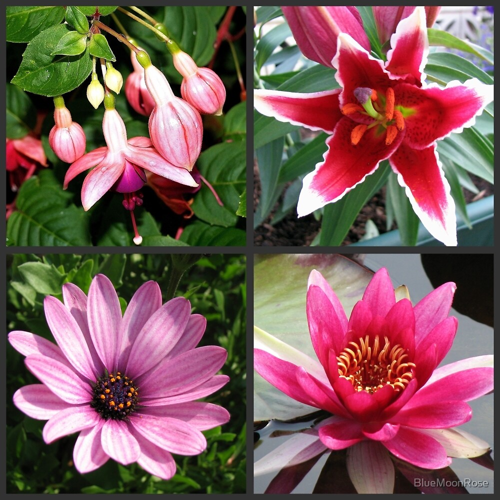 Vibrant Pink Summer Flowers Collage by BlueMoonRose