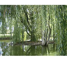 Through The Willow Curtain Photographic Print