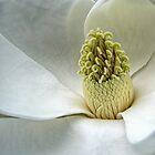 Magnolia by EbyArts