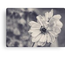 Spring Twins in Black and White Canvas Print