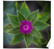 Purple Flower Power Poster