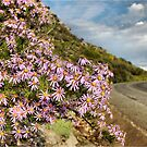 ON THE WAY TO NIEUWOUDTVILLE - NAMAQUA - SOUTH AFRICA by Magriet Meintjes