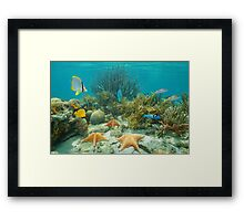 Underwater coral reef starfish and tropical fish Framed Print