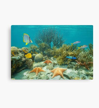 Underwater coral reef starfish and tropical fish Canvas Print