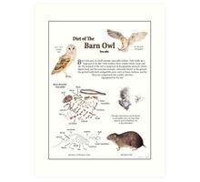 Diet of the Barn Owl Art Print