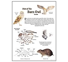 Diet of the Barn Owl Photographic Print