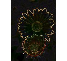 Marigolds glow Photographic Print