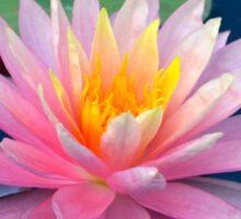 Pretty Pink Water Lily Sticker