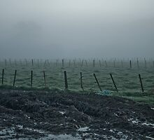 Landscape - Muddy Fields and Fences in  Morning Fog by Kim-maree Clark
