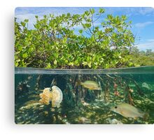 Mangrove half and half with fish and jellyfish Canvas Print