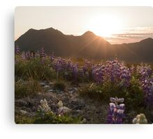 Alaskan Summer Sunset Canvas Print