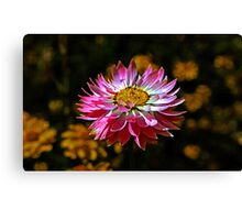 One Pink Paper Daisy Canvas Print
