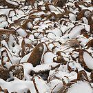 Snow Covered Boulders, Mt Wellington, Tasmania by Chris Cobern