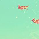 Ducks Swimmimg in the Water by iamsla