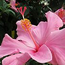 Happy Hibiscus by Monnie Ryan